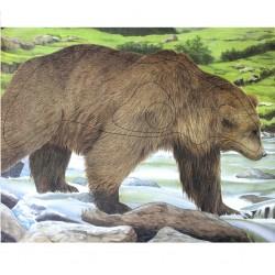Мишень Медведь из армированной бумаги
